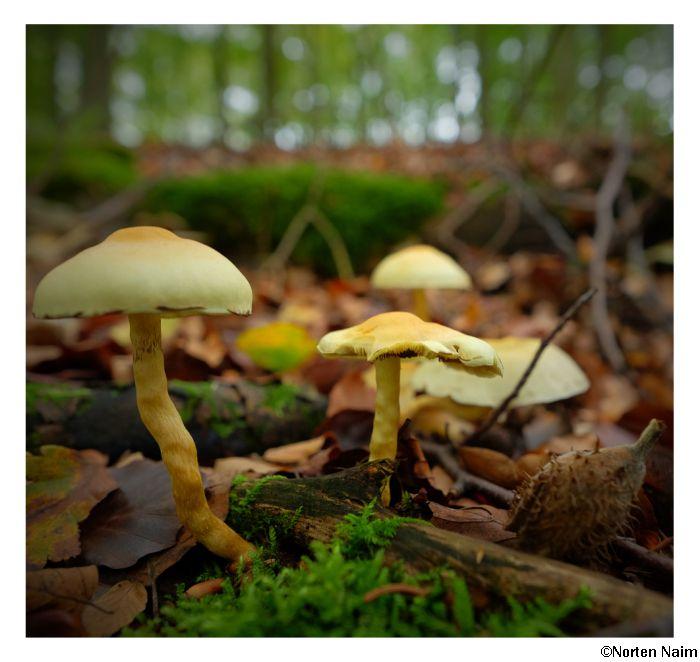 Auf dem Waldboden