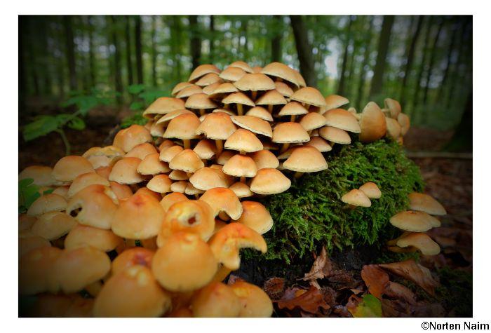 Invasion im Wald