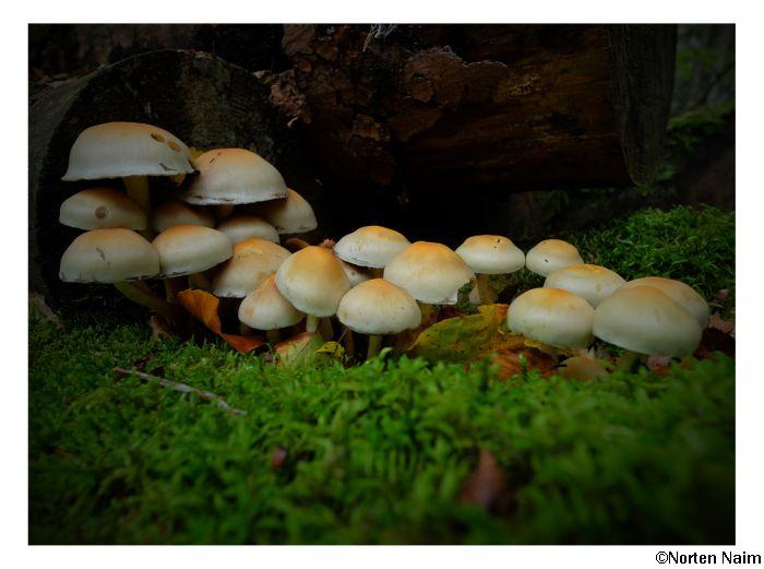 Kleine Kolonie